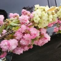 花の命は短くて…(^-^;)