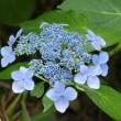 我が家に咲く花(6月)