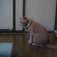 ■猫粥痒学NORA■「ちょっとブレイク。」