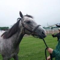 2009年募集馬 社台・サンデー牧場見学ツアー その6