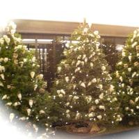 クリスマスツリー@PS Cafe