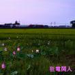 日の出とともに花開く