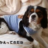 「まる」の伊豆車中泊記~下田から伊東マリンタウン編~