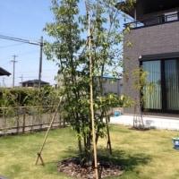 木の植え替え