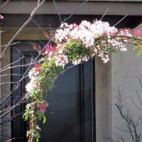 桜色のアーチに想う