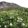 【大雪山国立公園・旭岳情報】散策する方もしない方も