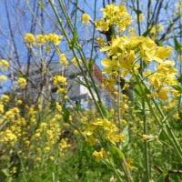 春の花とガルバ【村上staff】