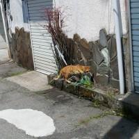 路地の猫さま