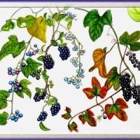 3種類の果実