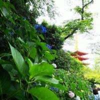 五月富士と紫陽花と