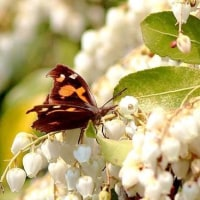 今季初の蝶散歩