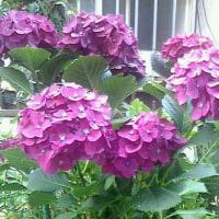 サボテンの花が