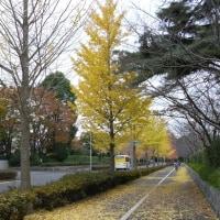秋・街の中森の中<その7>黄金色