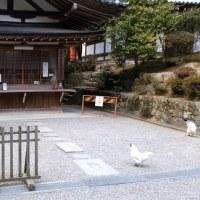 奈良ポタリング