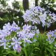 石橋文化センターの花