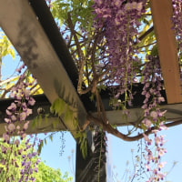 自主保育まんまる わんぱく広場 クマバチは大丈夫。