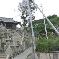 愛媛県青島の島旅 9回目