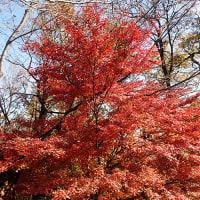 昨日弘法山の紅葉を見に行って来ました