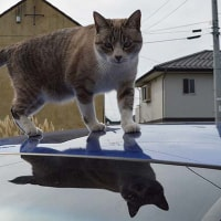 ジャンプ猫&三井寺
