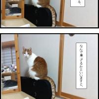 茶白猫のこむぎ兄さんの無言の訴え。