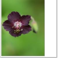春の花、、イロイロ、、。
