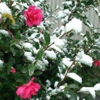 11月の雪Ⅱ