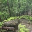 1058       梅雨空の愛宕山(愛宕167) 2017.07.09       小雨後曇り