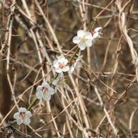 第138回いずみの国の自然館クラブ観察会~谷山池周辺~ 2