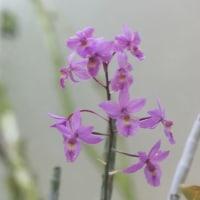 植物園の花 (3)