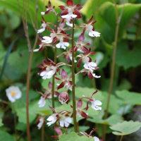 チューリップ&パンジー 庭の花