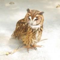掛川花鳥園で猛禽類