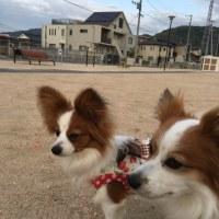 4/25  今日のパピ子といちご