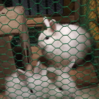 子ウサギ2羽をケージ入れた