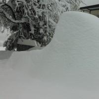 2/15記録的大雪(画像あり)