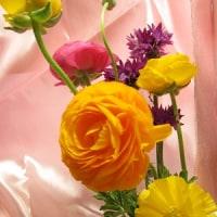 20160409花たち。