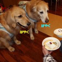 キャンディのお誕生日だね!!!