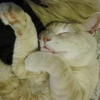 コータの寝顔が可愛過ぎる♪