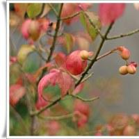 庭で秋の深まりを楽しむ