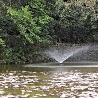 佐倉城址公園の池
