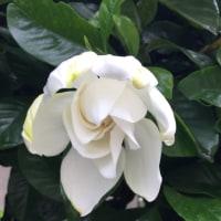 オレンジ色と白い花