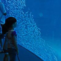 名古屋港水族館 (黒潮大水槽) 20