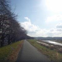 ポタリング日記-46日目-多摩川(羽村堰)(100.2km)