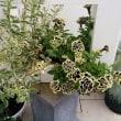 プロポーズの花篭、7月のリース、夏に強いゴージャス寄せ植え