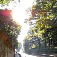 湯立坂(第163段)