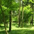 炎暑の下、徘徊のオアシスは緑陰・涼風の道