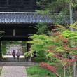 曹源寺の蓮の花 2 in 岡山市