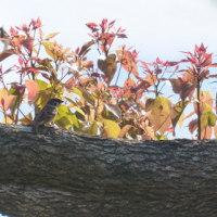 161203 松延池でミサゴと遭遇、大自然の驚異!