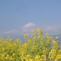 囲碁と菜の花富士山