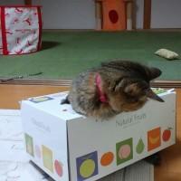 箱ネコ以上にどんくさい
