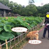 久々の3匹でのお散歩(千葉公園一番の人気花)